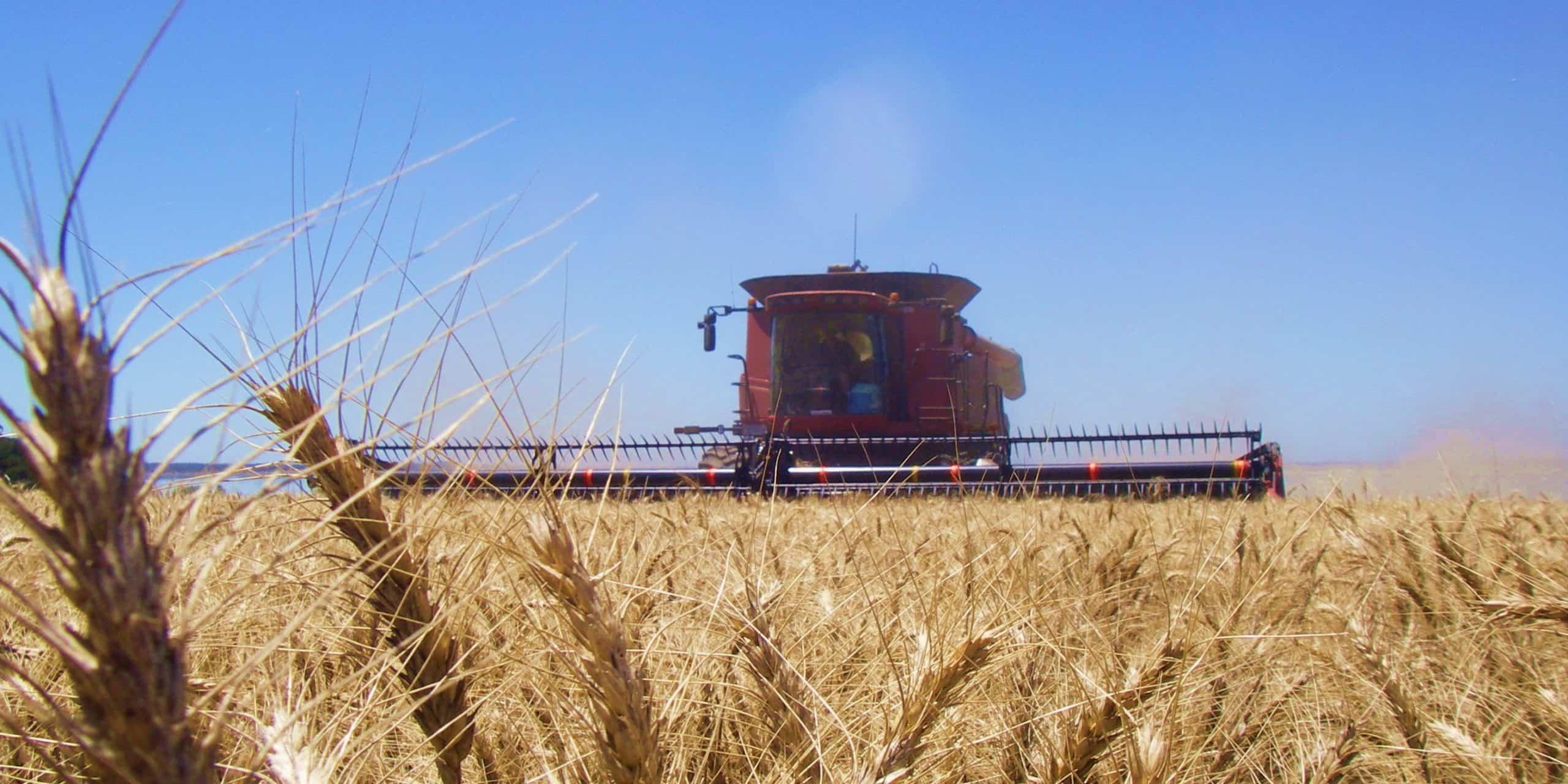 Emerald Grain & Project Support